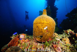 Jug on Wreck, Truk Lagoon by Brian Gonzales 